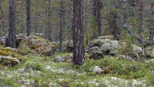 This forest language from the age of Vikings may soon disappear